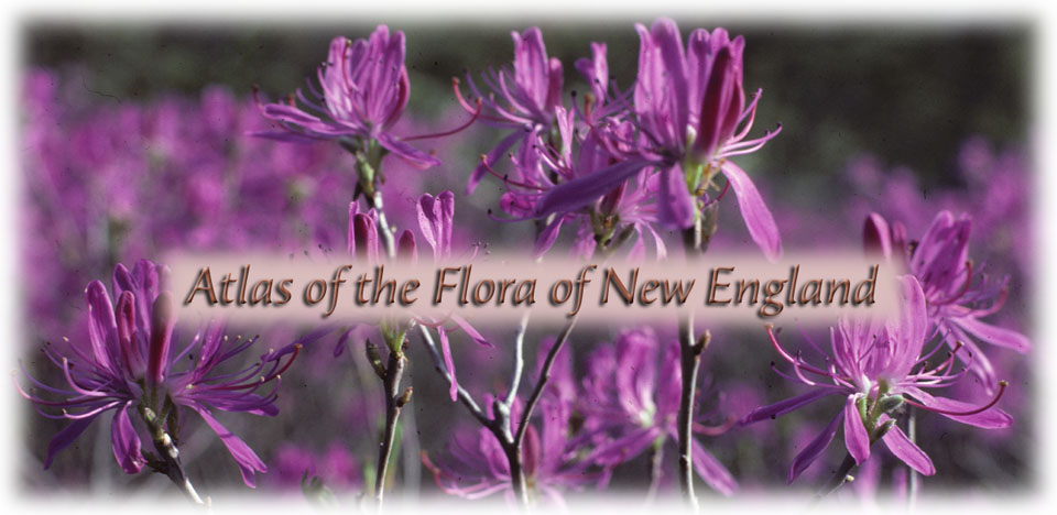 Atlas of the Flora of New England